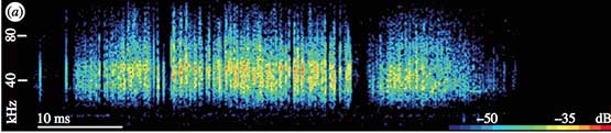 Anti-bat Spectrogram produced by Hawk Moth