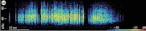 Anti-bat Spectrogram produced by Hawk Moth