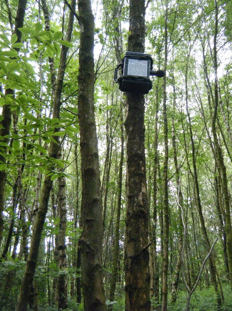 A picture showing ARUPI fixed to a tree in a forest
